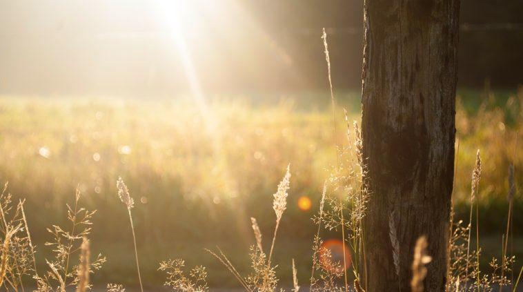 AKARI.がご提案する美と健康 ①育成光線